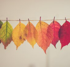 different colored leaves on a string