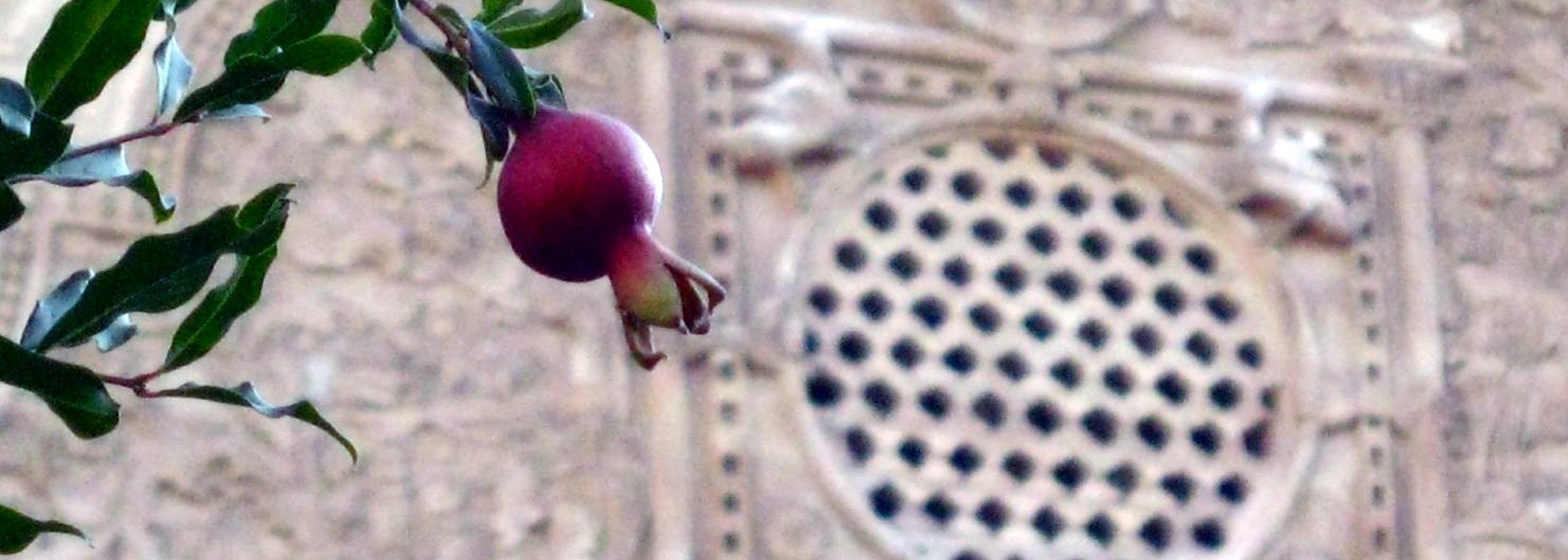 درخت انار - کاشان ایران
